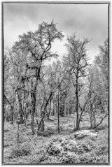 Kuldegrader og skodde er og med på å dekorere skogen 😊
